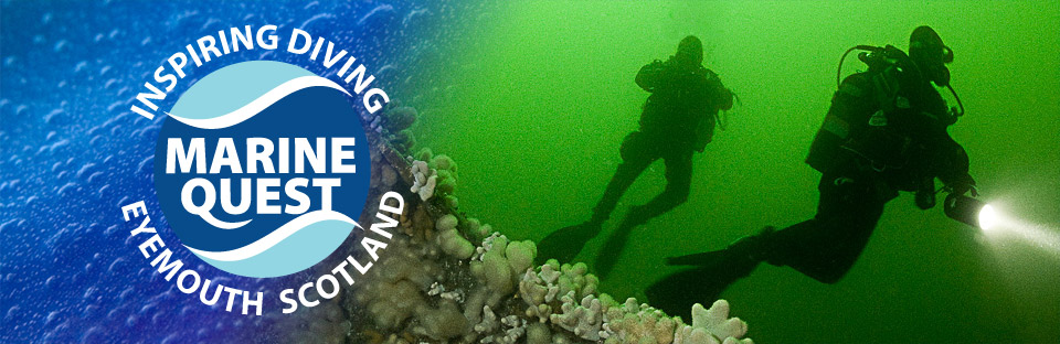 Diving-Shallow-Wreck.jpg